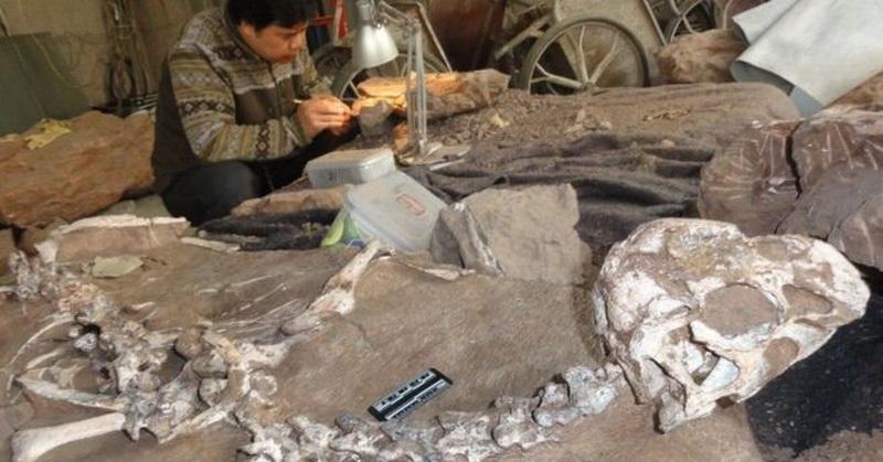 https: img.okezone.com content 2016 11 11 56 1539000 spesies-baru-dinosaurus-ditemukan-di-china-CKUAo8uWVc.jpg