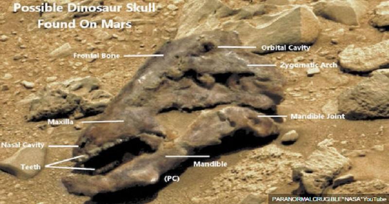 Ditemukan Penampakan Mirip Fosil Dinosaurus di Mars