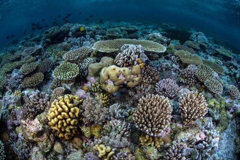 Anda juga juga bisa menemui banyak spesies laut yang hidup di kedalaman lautnya.