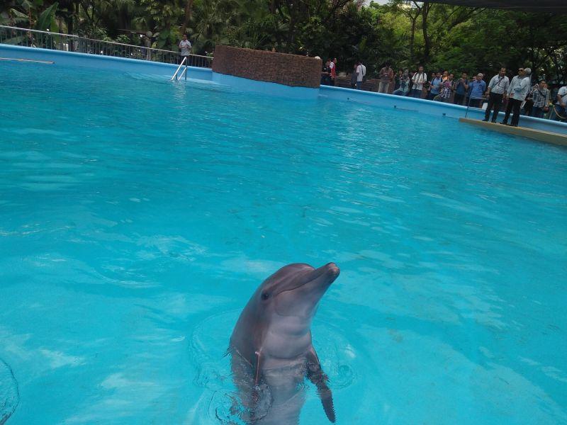 https: img.okezone.com content 2016 12 19 481 1570646 berinteraksi-dengan-lumba-lumba-dapat-sembuhkan-penderita-autisme-lho-DcJPvLZCgh.jpg