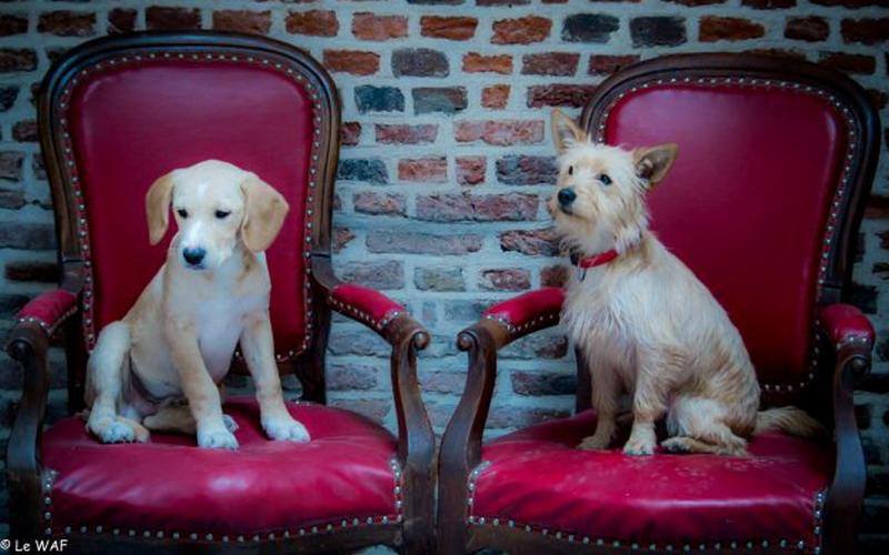 https: img.okezone.com content 2016 12 25 298 1575312 serunya-bermain-bersama-anjing-sembari-seruput-kopi-di-cafe-unik-ini-xahTuuu7I8.jpg