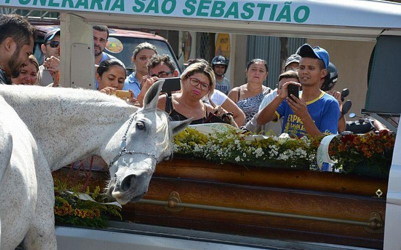 Kuda Putih Bernama Sereno Menangis di Dekat Peti Jenazah Majikannya. (Foto: Carters News Agency/Daily Mail)