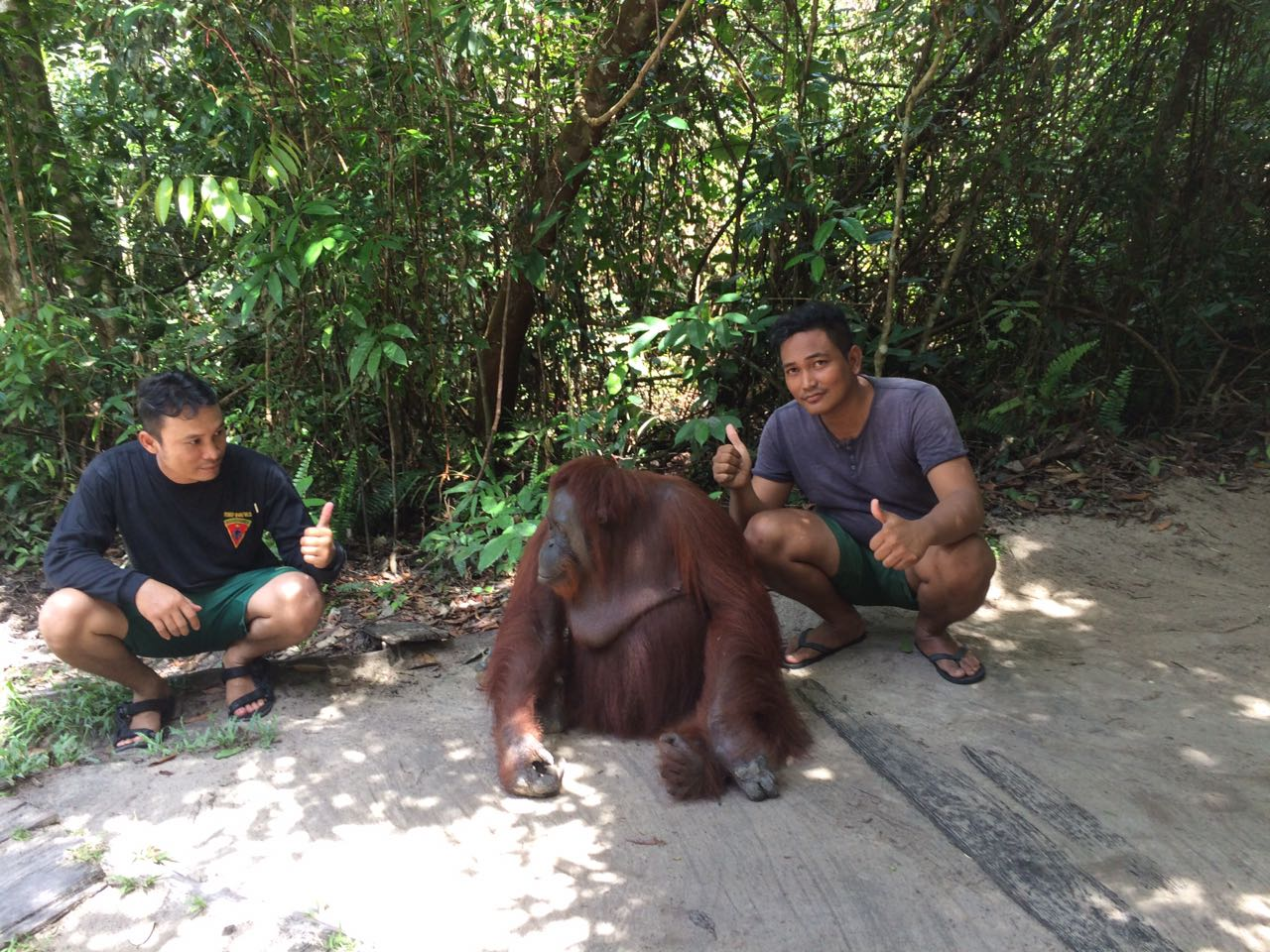 Prajurit TNI Kodim 1014, Pangkalan BUN tengah berinteraksi dengan orangutan (Foto: Sigit Dzakwan)