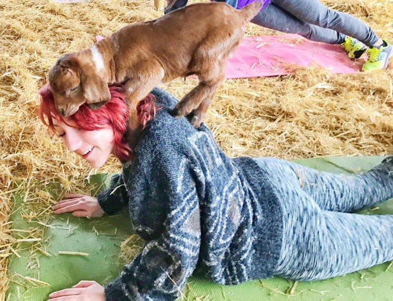 Yoga bersama kambing. (Foto: Twitter)