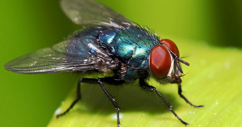 https: img.okezone.com content 2017 01 12 56 1590161 hadits-dan-sains-misteri-sayap-lalat-secara-ilmiah-4Lyu6bxNWd.jpg