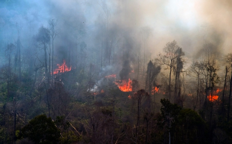 Image result for kebakaran riau 2017