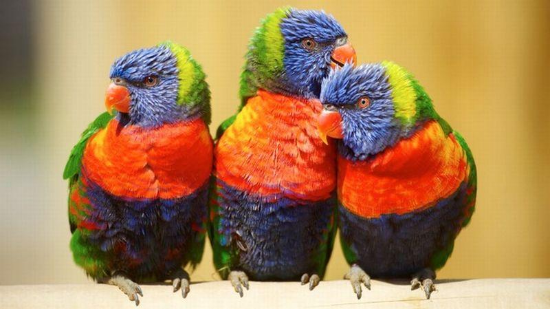 46 Koleksi Gambar Hewan Burung Nuri Gratis Terbaik