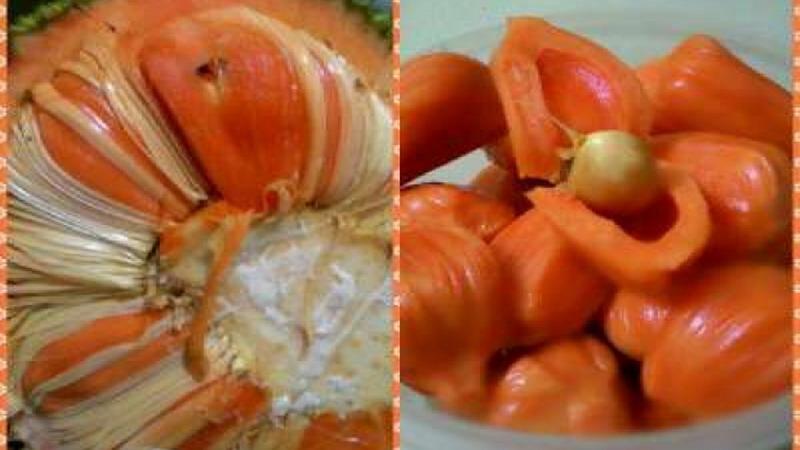 https: img.okezone.com content 2017 03 06 298 1635662 wow-bukan-hanya-durian-merah-banyuwangi-juga-punya-nangka-merah-T9M2h6U4AW.jpg