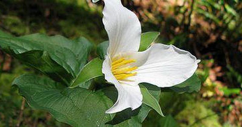 Peran Angin dalam Perkawinan Tumbuhan Dijelaskan Alquran dan Sains