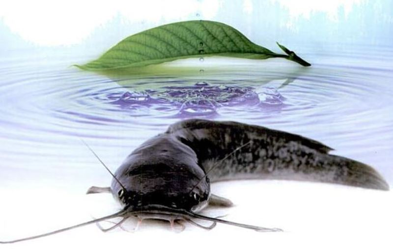 Wow Mahasiswa Lampung Buat Cendol Dari Ikan Lele Okezone News