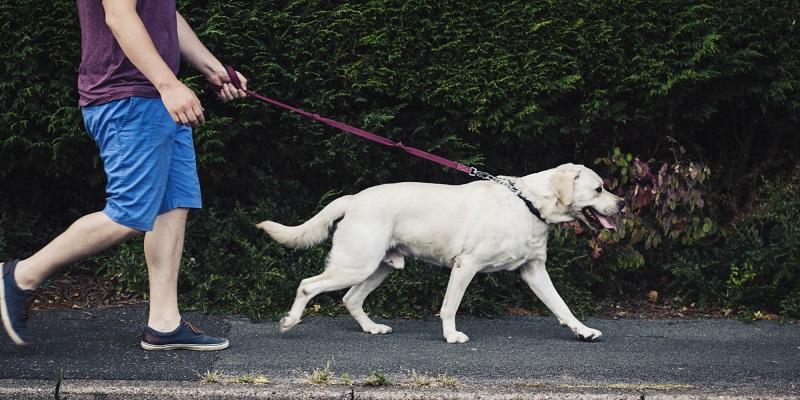 https: img.okezone.com content 2017 03 17 481 1645873 berjalan-jalan-dengan-anjing-peliharan-mampu-menekan-risiko-stroke-JgxCJYaCOH.jpg