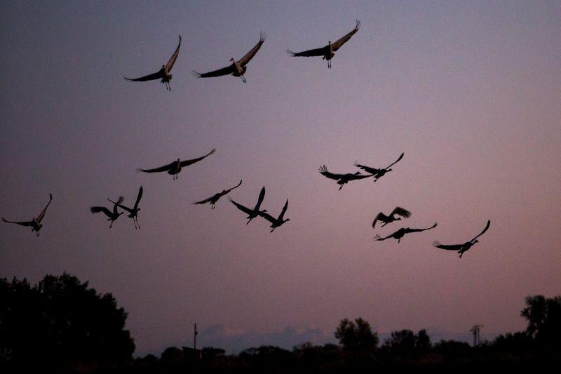 Stasiun Luar Angkasa Bakal Bantu Burung dan Serangga Bermigrasi