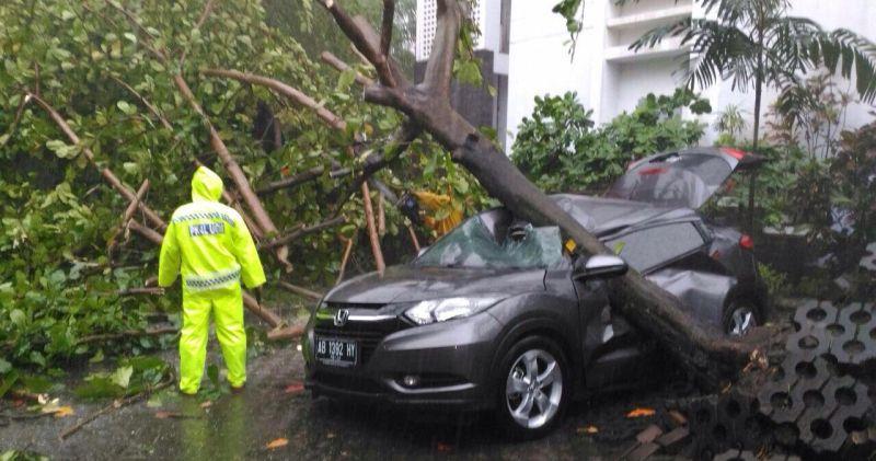 Pohon Tumbang Menimpa Pohon Milik Dosen UGM (Foto: Ist)
