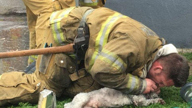Keren! Pemadam Kebakaran Ini Selamatkan Anjing dengan Pernapasan Bantuan