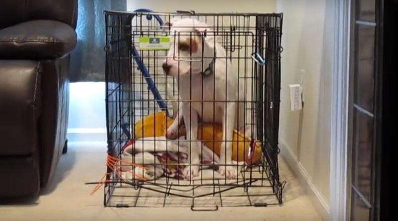 VIDEO: Seperti Pesulap, Seekor Anjing Menyelinap Keluar dari Kurungannya