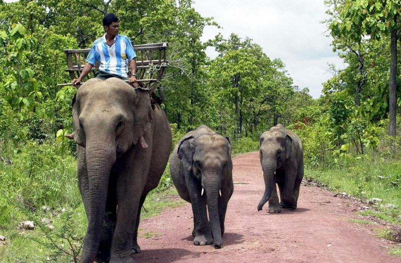 Ilustrasi. Gajah. (Foto: AFP)