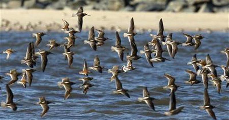 Alquran dan Sains Jelaskan Keahlian Burung saat Terbang