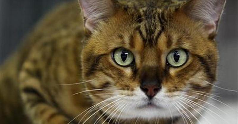 Hadis dan Sains Jelaskan Fakta-Fakta soal Kucing