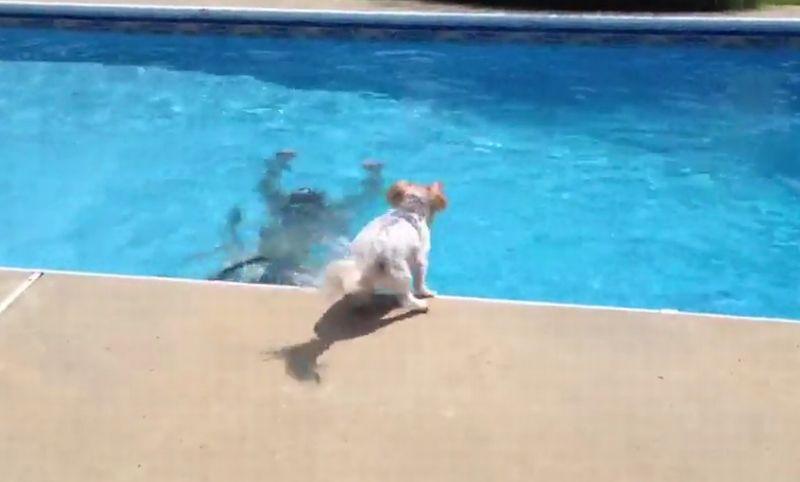 Anjing ini panik ketika pemiliknya 'tenggelam'. (Foto: Metro)