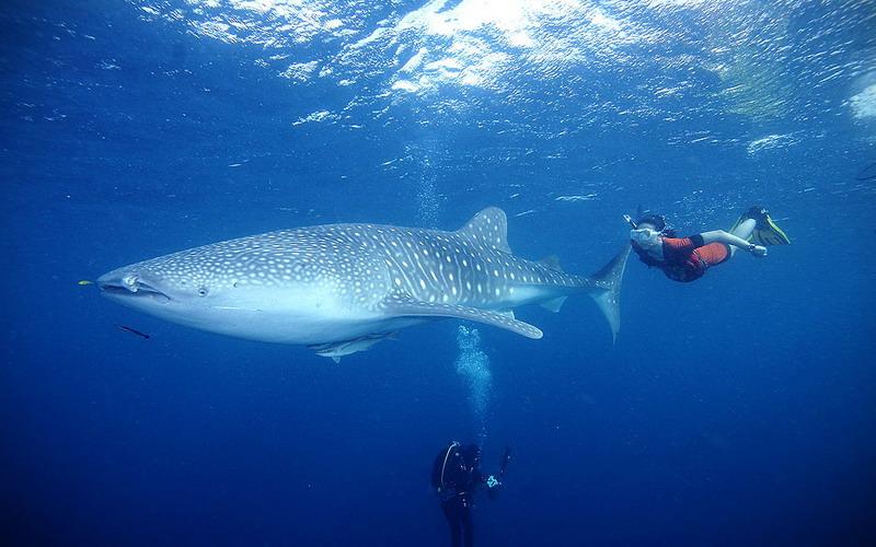 https: img.okezone.com content 2017 04 25 406 1675831 pecinta-diving-wajib-rasakan-taman-nasional-teluk-cendrawasih-papua-4Dsjz7qwwX.jpg