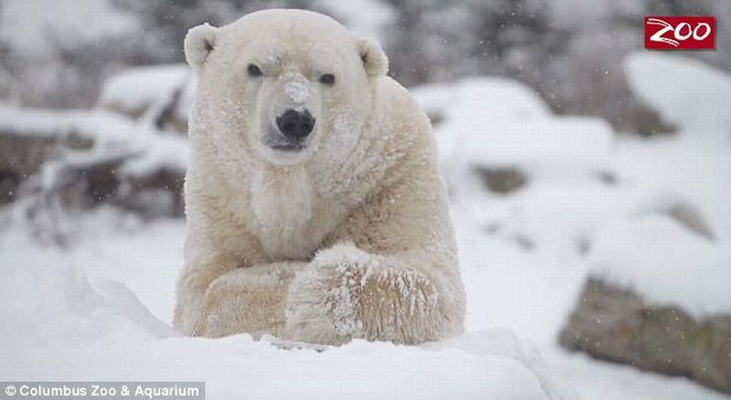 106 Gambar Binatang Sedih Lucu Gratis Terbaru