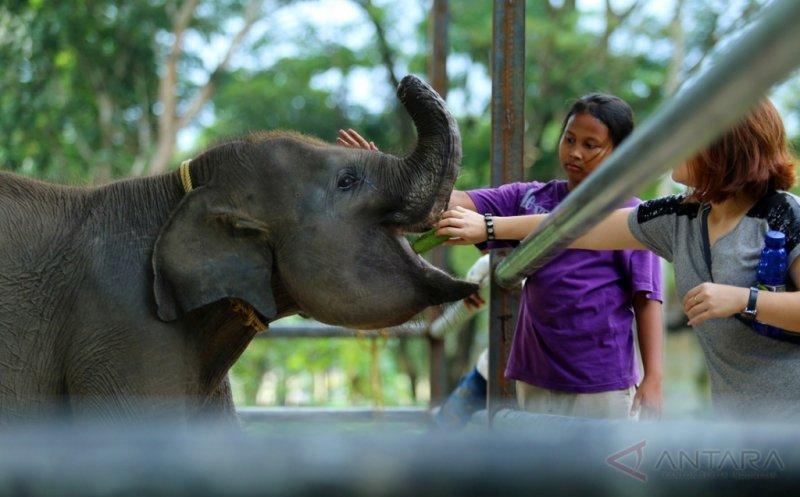 https: img.okezone.com content 2017 05 02 406 1680991 lebih-dekat-dengan-erin-anak-gajah-yang-belalainya-terpotong-akibat-dijerat-pemburu-enuK6xXzBw.jpg