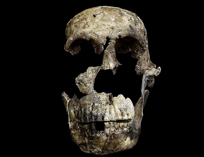Memiliki Otak Seukuran Jeruk, Spesies Homo Naledi Mirip dengan Manusia