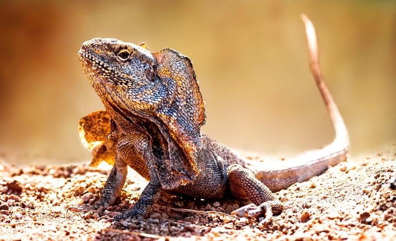 Global Warming Bisa Jadi Penyebab Punahnya Reptil