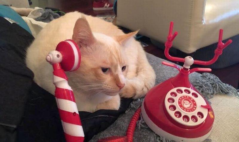 Buddy si kucing. (Foto: Alasdair Martin)