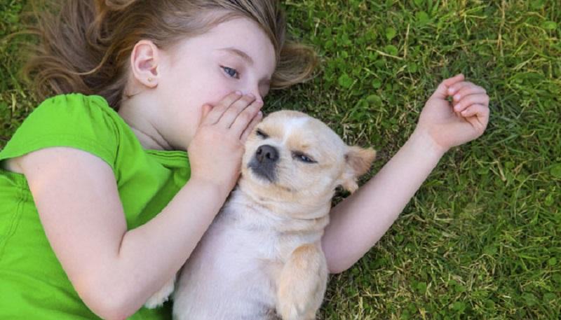 https: img.okezone.com content 2017 05 13 481 1690041 studi-punya-anjing-peliharaan-mengurangi-stres-pada-anak-w77Bk7VhoX.jpg