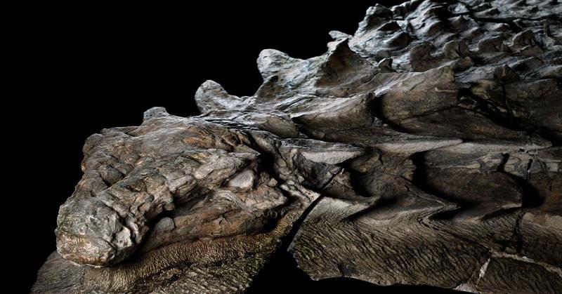 Fosil Kuno Dinosaurus Dipamerkan di Museum Kanada