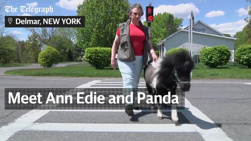 Anna Edie dan Panda menyeberang jalan. (Foto: Telegraph)