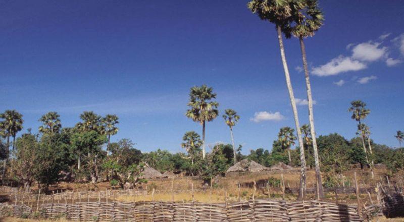 INSPIRASI BISNIS: Ubah Kayu Pinus Jadi Gantungan Baju, Pria Ini Raup Jutaan Rupiah
