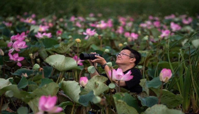 Seorang turis mengabadikan pemandangan bunga teratai yang bermekaran di Khao Sam Roi (Foto: AFP)