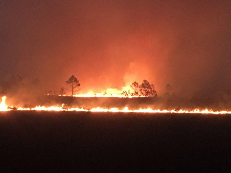 Penampakan api yang membakar wilayah perbatasan Highlands dan Polk County (Foto: Florida Forest Service/Facebook)