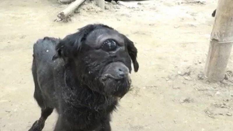 Anak kambing yang terlahir dengan mata satu. (Foto: Barcroft)