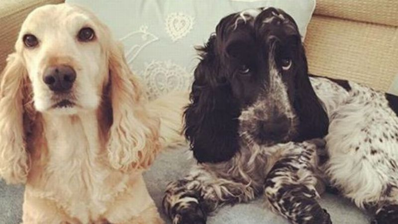 Anjing peliharaan milik Matt Shepherd. (Foto: BBC)