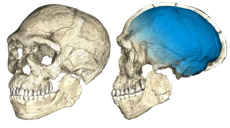 Foto ilustrasi fosil manusia (Foto: Reuters)