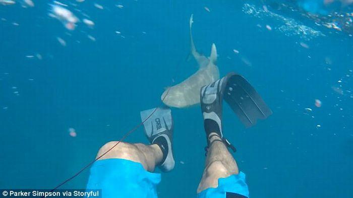 https: img.okezone.com content 2017 06 08 406 1711210 ngeri-seorang-nelayan-digigit-hiu-ketika-sedang-berenang-vukHjhhcY8.jpg
