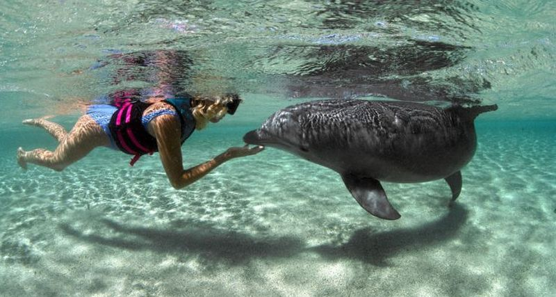 Bahasa Lumba-Lumba Nantinya Bisa Dipahami Manusia