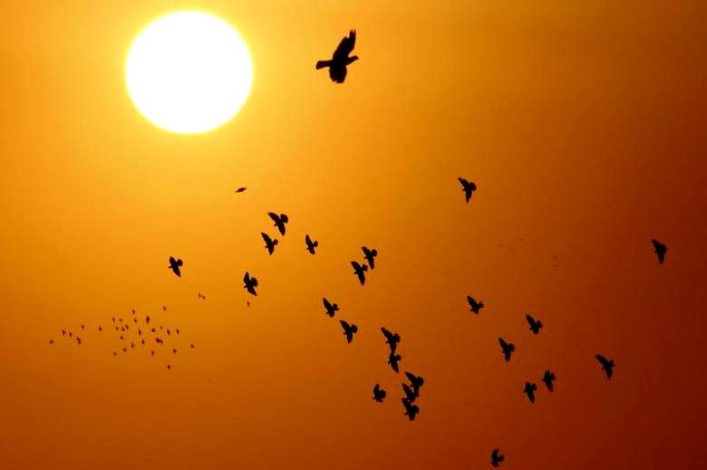 Lama Menjadi Misteri, Matahari Ternyata Punya Bintang