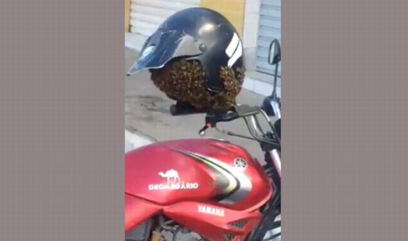 Helm yang digantung di motor diserang lebah (Live Leak)