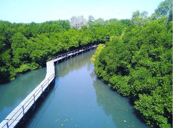 UNCOVER INDONESIA: Menelusuri Keindahan Hutan Mangrove Bali : Okezone Lifestyle