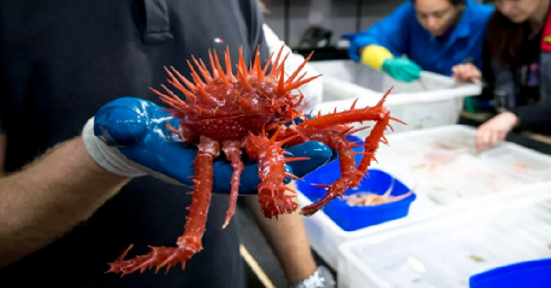 Spesies Menyeramkan Ditemukan di Zona Abyssopelagic