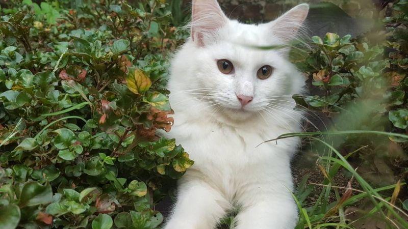 TOP TECHNO: Ini Alasan Kucing Suka Dielus di Bagian Kepala