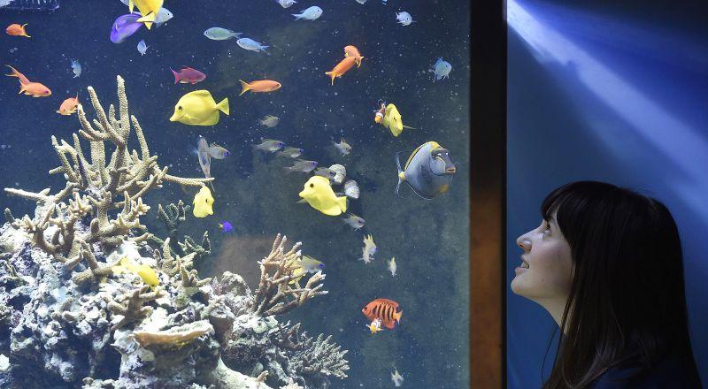 Desain Akuarium Ruang Tamu  inspirasi bisnis usaha akuarium dan ikan hias bisa balik