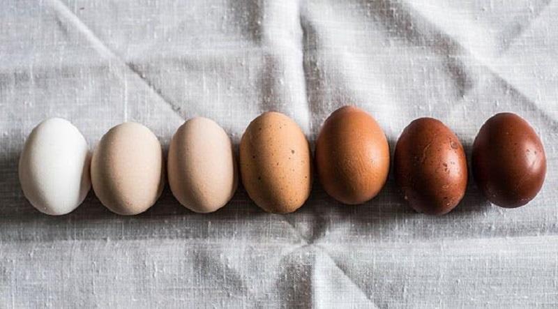 Terungkap Beda Warna Bulu Ayam Beda Juga Warna Telurnya Okezone Lifestyle