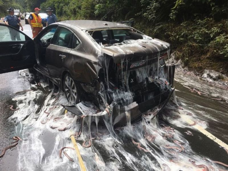 Sebuah mobil dihujani belut di AS. (Foto: Sky News)