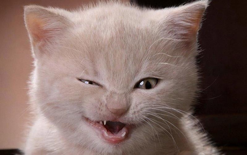 https: img.okezone.com content 2017 07 17 337 1738559 hot-thread-5-diselamatkan-pesepeda-dari-brasil-lucunya-kucing-ini-ungkapkan-terima-kasih-6qSvqKlcJm.jpg