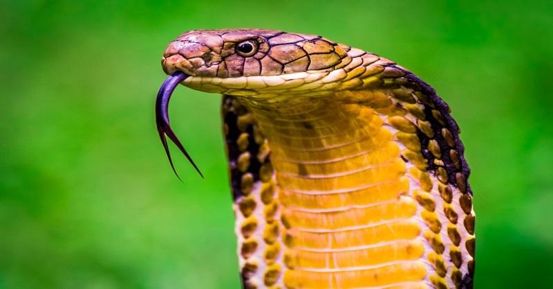 Hati-Hati, 5 Hewan Ini Punya Racun Paling Mematikan di Dunia